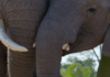 Disney nature film Elephant