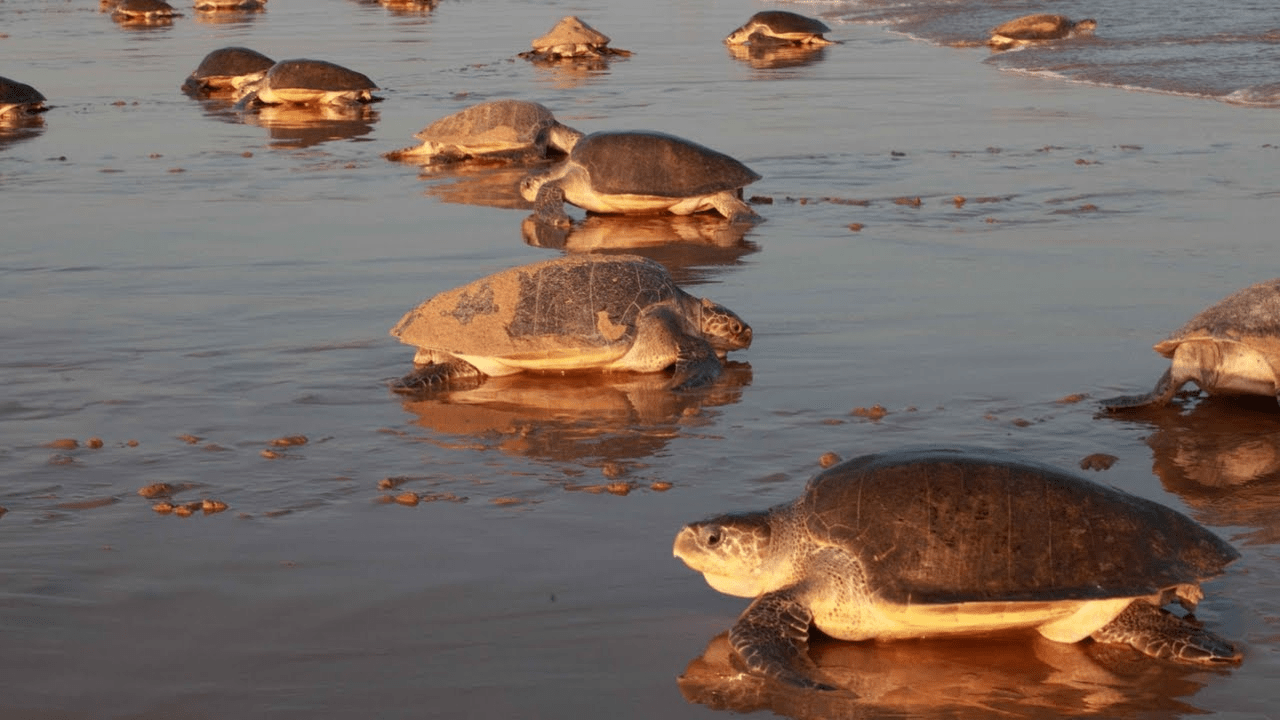 World Turtle Day 2020 - All You Should Need to Know About-min